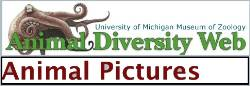 University of Michigan`s Animal Diversity Web can find you just about any animal on the planet, most with great photographs or drawings.