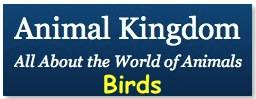 Animal Kingdom is all about the world of animals. If you love animals, or need to do a school project on animals, this site will provide you with a wealth of information on a wide variety of animals.