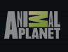 Animal Planet has information, photos, videos, and more, on endangered species.