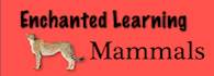 Try out the mammal links on Enchanted Learning.  Be sure to click on Groups of Mammals as well