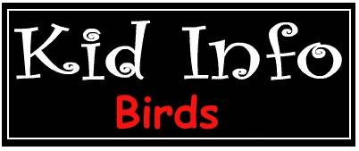 Learn the facts about Birds, Bird Anatomy, How Birds Fly, the Life of Birds, the Varieties of Birds, the Classifications of Birds. Watch Bird Videos and Listen to the Sounds Birds Make on KidInfo.com's Birds Resource Page.