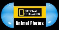 View animal galleries from National Geographic : animals, animal photos, animal pictures, national geographic