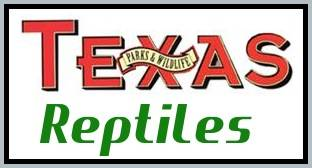 Information about Wildlife Species found in the State of Texas including Indigo Snake, Kemps Ridley Sea Turtle, Eastern Box Turtle, Hawksbill Sea Turtle, Scarlet Snake, Louisiana Milk Snake, and Loggerhead Sea Turtle